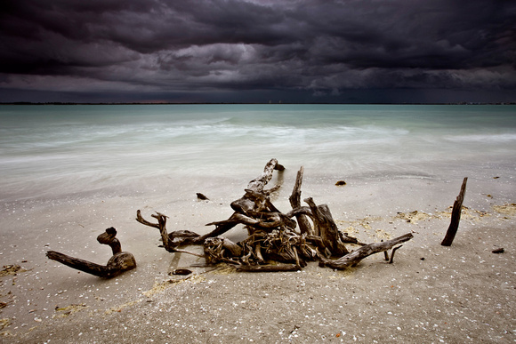 Driftwood before a Morning Storm