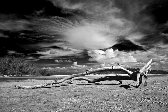 Estero Lagoon, Driftwood and Clouds