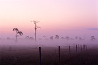 Foggy Fenceline, the Challenger Dawn series