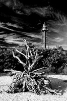 Sanibel Lighthouse and Driftwood Stump