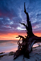Beach Stump Sunrise